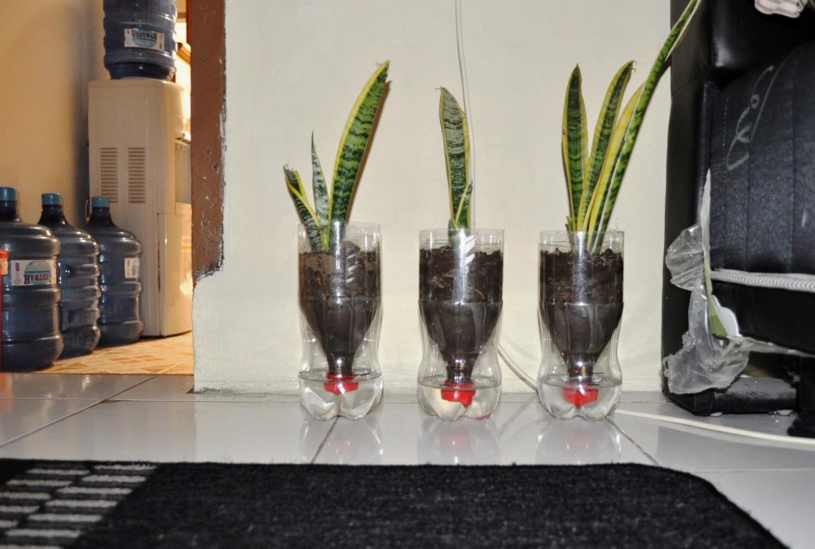 Cara Membuat Pot Bunga Dari Botol Plastik Bekas Ide Kreatif Dari Botol Plastik Youtube